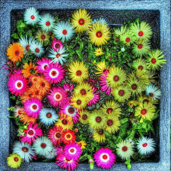 IJsbloemen Digital Art Iceflowers