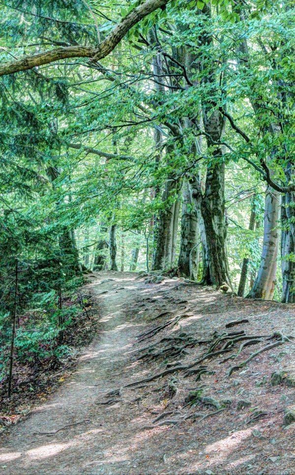 Bosdoorgang 8 in de buurt van Eeuwenoude Felsenburg Vranov in Tsjechië.